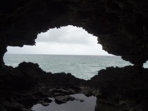 Ocean_Animal_Flower_Cave_Barbados