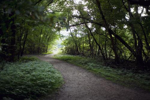 resurrection_forest_img